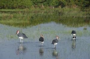 Naivasha is a bird haven